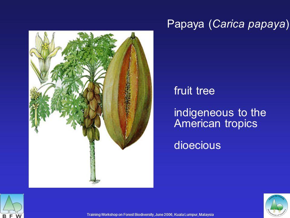 Papaya (Carica papaya) fruit tree indigeneous to the American tropics dioecious Training Workshop on Forest Biodiversity, June 2006, Kuala Lumpur, Malaysia