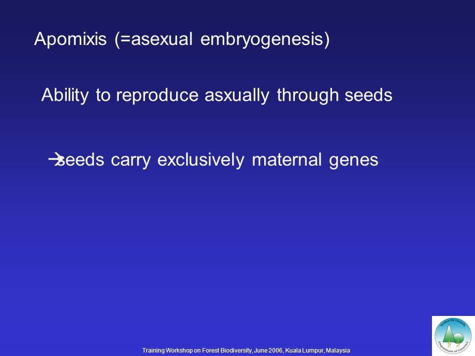 Apomixis (=asexual embryogenesis) Ability to reproduce asxually through seeds seeds carry exclusively maternal genes Training Workshop on Forest Biodiversity, June 2006, Kuala Lumpur, Malaysia