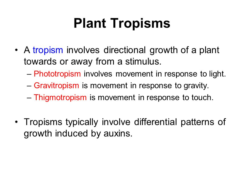 Plant Tropisms A tropism involves directional growth of a plant towards or away from a stimulus. – Phototropism involves movement in response to light