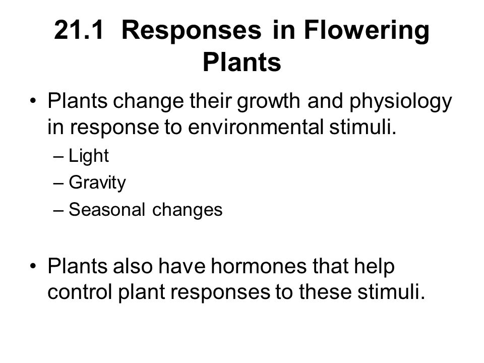 21.1 Responses in Flowering Plants Plants change their growth and physiology in response to environmental stimuli. –Light –Gravity –Seasonal changes P