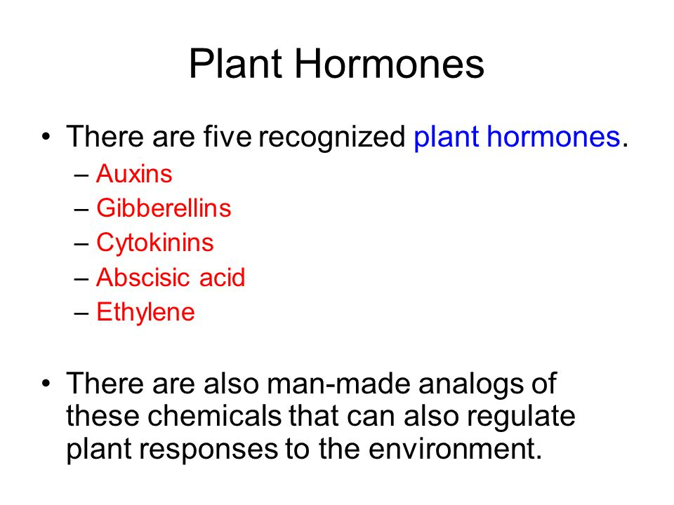 Plant Hormones There are five recognized plant hormones. – Auxins – Gibberellins – Cytokinins – Abscisic acid – Ethylene There are also man-made analo