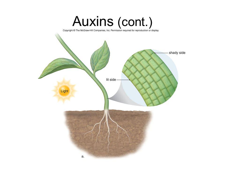 Auxins (cont.)