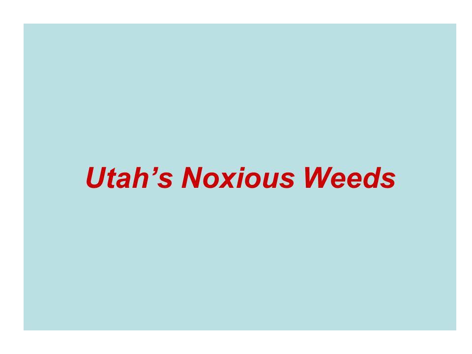 Utahs Noxious Weeds