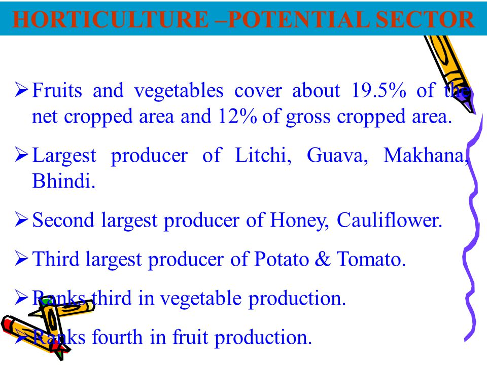 Area, production & productivity under Major horticultural crops in Bihar (2004-2005) Sl.