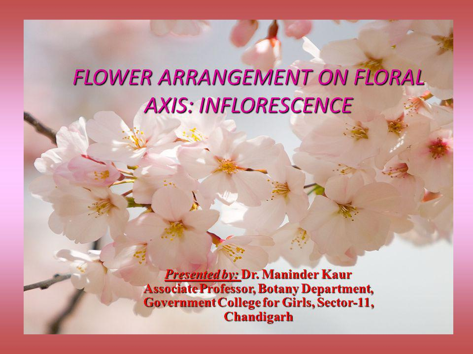 FLOWER ARRANGEMENT ON FLORAL AXIS: INFLORESCENCE Presented by: Dr. Maninder Kaur Associate Professor, Botany Department, Government College for Girls,