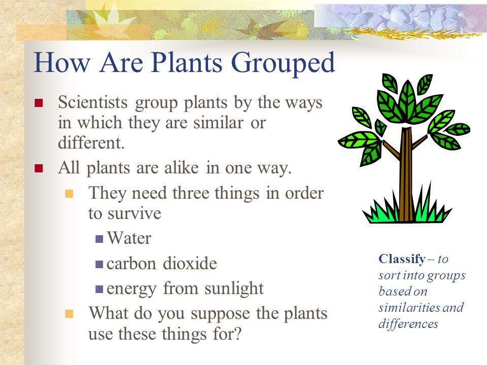 How Are Plants Grouped Scientists group plants by the ways in which they are similar or different. All plants are alike in one way. They need three th