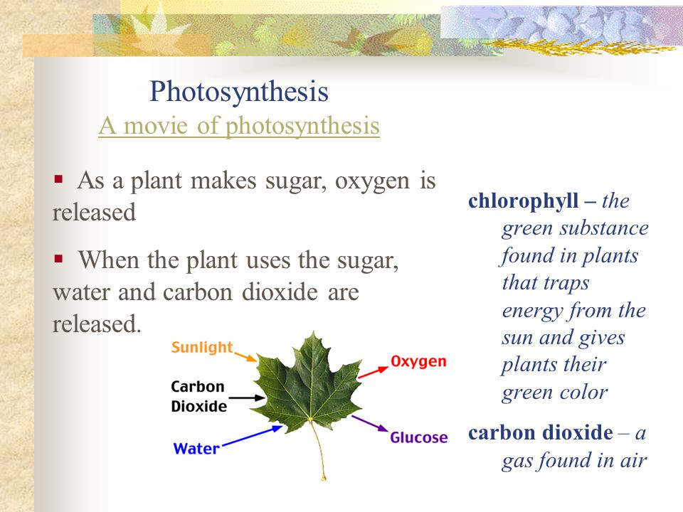 How Do Plants Get Energy Plant leaves change light energy into energy the plant can use.