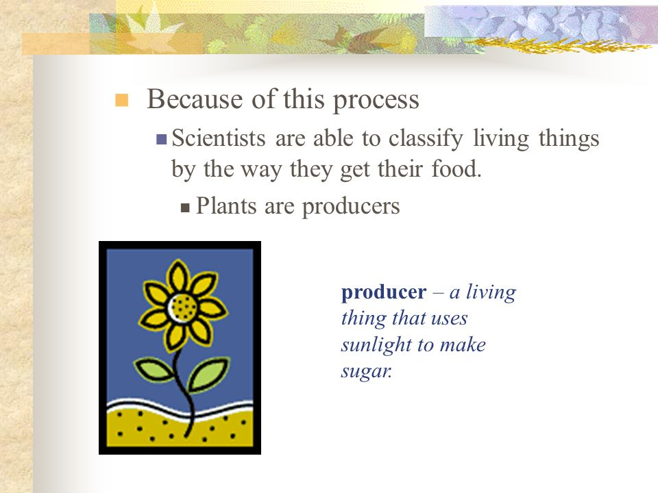 Because of this process Scientists are able to classify living things by the way they get their food. Plants are producers producer – a living thing t