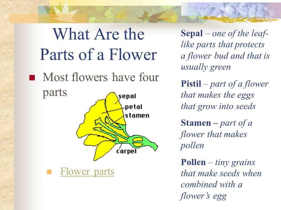 How Do Flowers Make Seeds and Fruits.