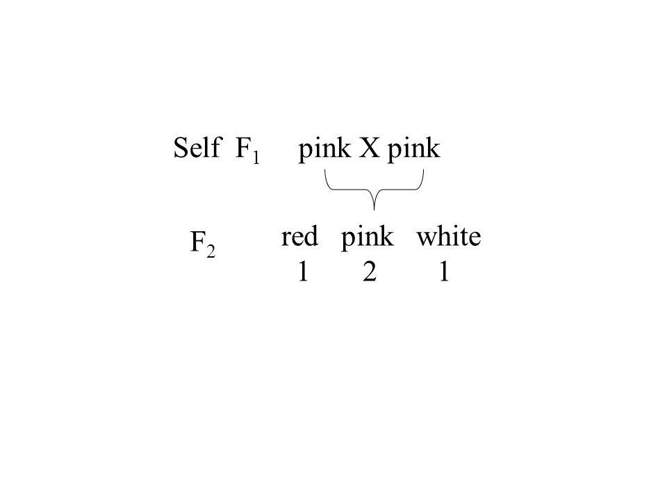 Self F 1 pink X pink red pink white 1 2 1 F2F2