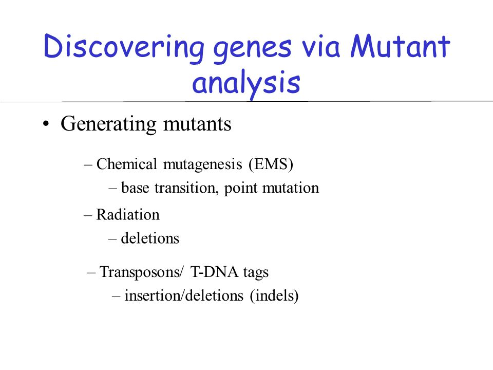 Discovering genes via Mutant analysis Generating mutants – Chemical mutagenesis (EMS) – base transition, point mutation – Radiation – deletions – Transposons/ T-DNA tags – insertion/deletions (indels)