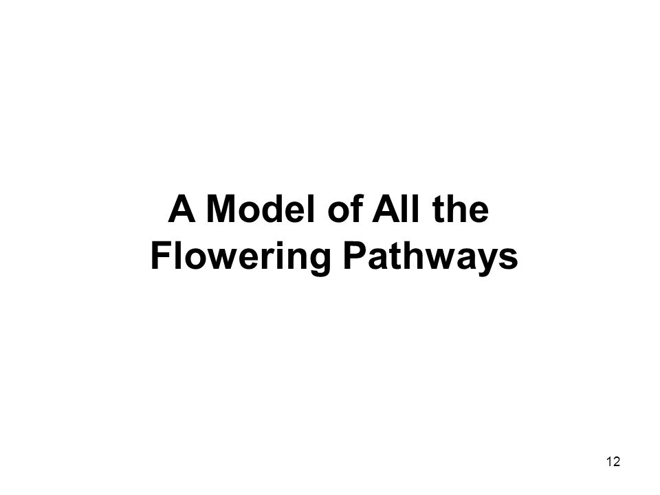 12 A Model of All the Flowering Pathways