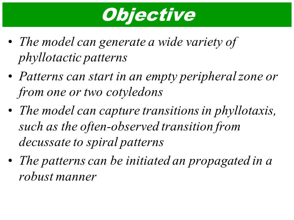 Objective The model can generate a wide variety of phyllotactic patterns Patterns can start in an empty peripheral zone or from one or two cotyledons The model can capture transitions in phyllotaxis, such as the often-observed transition from decussate to spiral patterns The patterns can be initiated an propagated in a robust manner