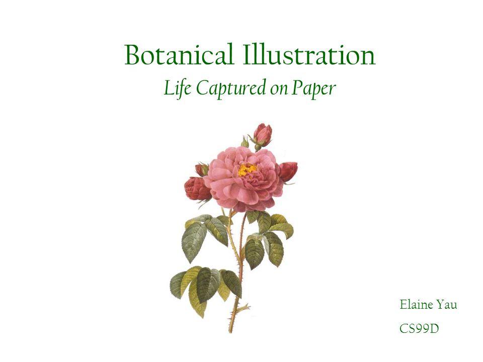 Botanical Illustration Life Captured on Paper Elaine Yau CS99D