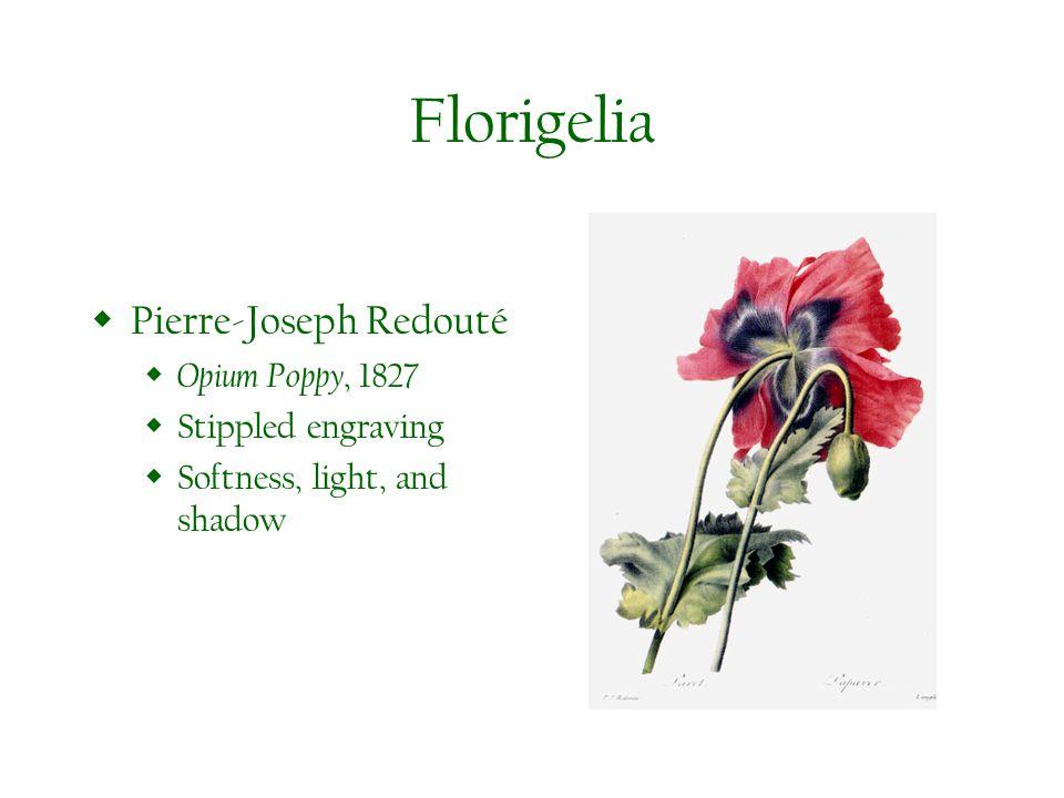 Florigelia Pierre-Joseph Redouté Opium Poppy, 1827 Stippled engraving Softness, light, and shadow
