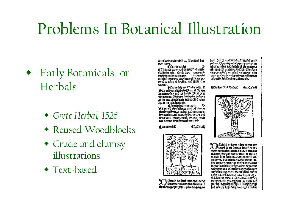 Problems In Botanical Illustration Early Botanicals, or Herbals Grete Herbal, 1526 Reused Woodblocks Crude and clumsy illustrations Text-based