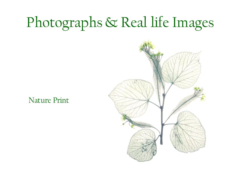 Photographs & Real life Images Nature Print