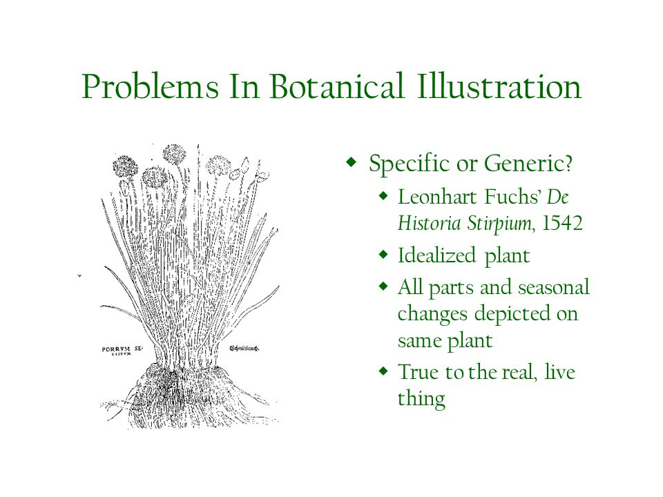 Problems In Botanical Illustration Specific or Generic.