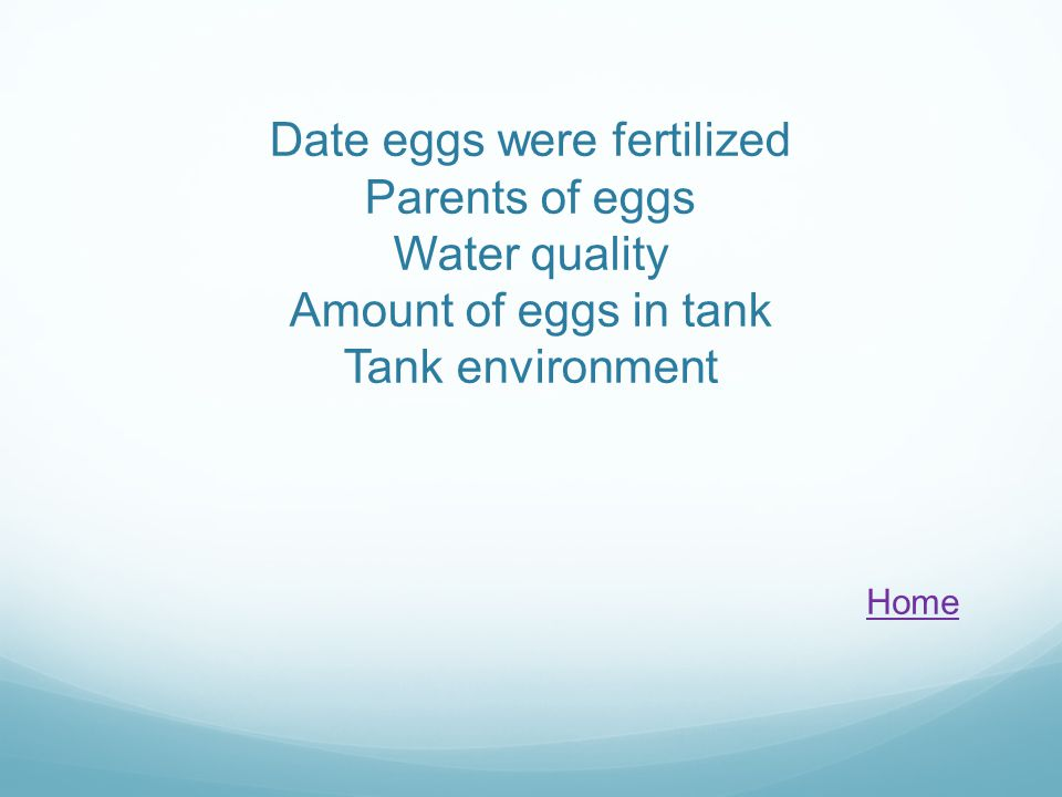 Date eggs were fertilized Parents of eggs Water quality Amount of eggs in tank Tank environment Home