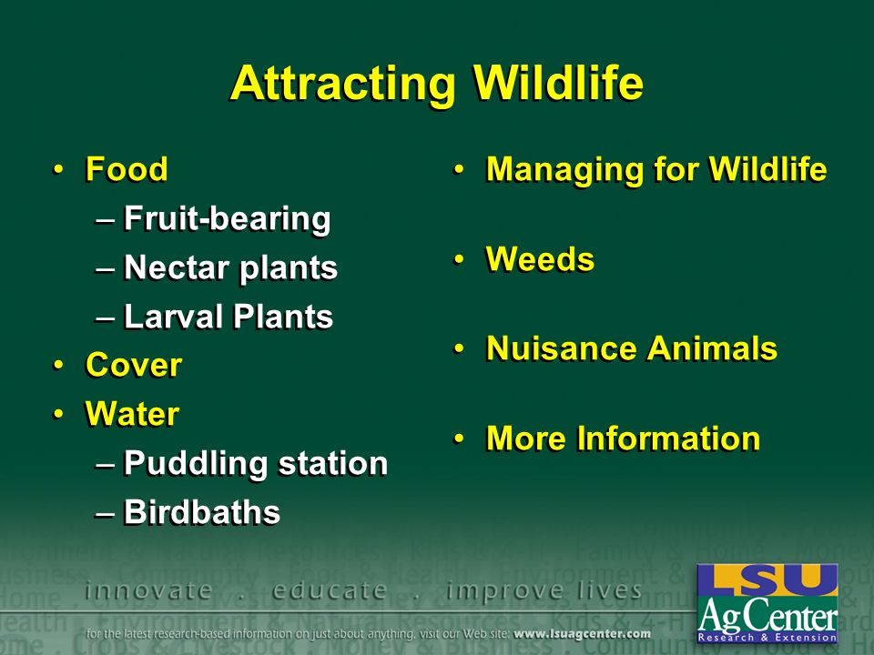 Attracting Wildlife Food –Fruit-bearing –Nectar plants –Larval Plants Cover Water –Puddling station –Birdbaths Food –Fruit-bearing –Nectar plants –Lar