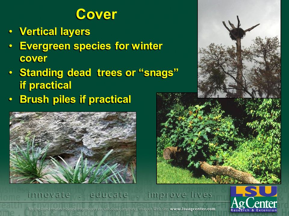 Cover Vertical layers Evergreen species for winter cover Standing dead trees or snags if practical Brush piles if practical Vertical layers Evergreen