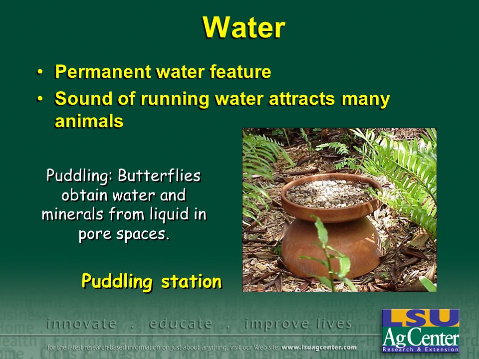 Water Permanent water feature Sound of running water attracts many animals Permanent water feature Sound of running water attracts many animals Puddli