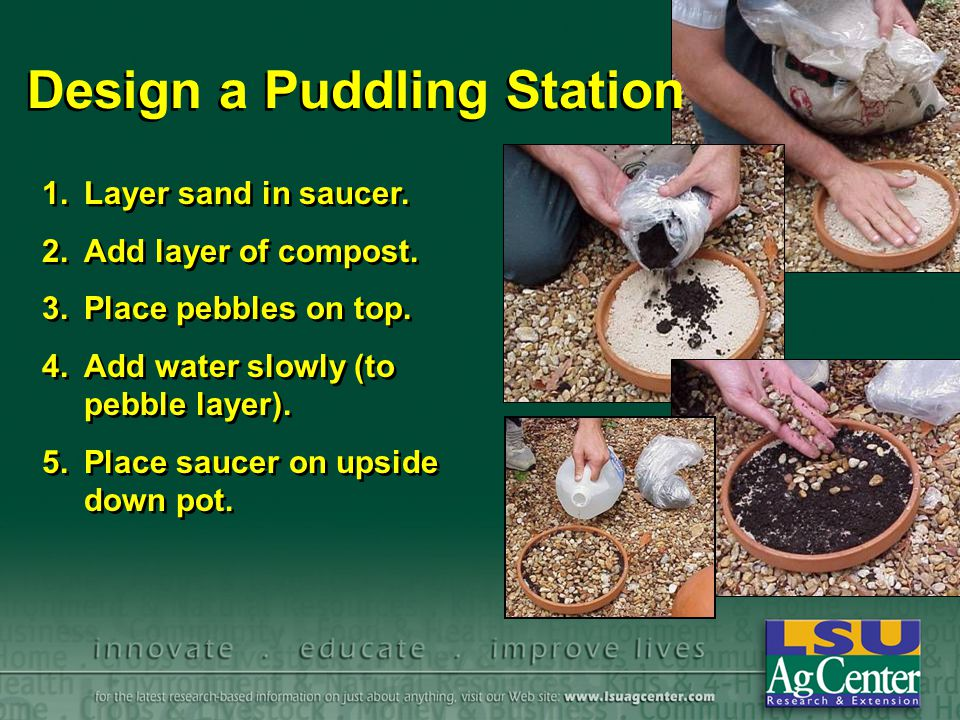Design a Puddling Station 1.Layer sand in saucer. 2.Add layer of compost. 3.Place pebbles on top. 4.Add water slowly (to pebble layer). 5.Place saucer