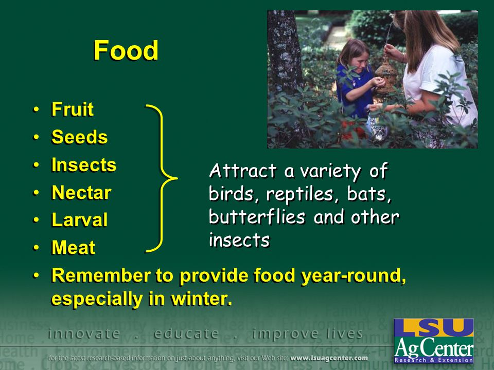 Food Fruit Seeds Insects Nectar Larval Meat Remember to provide food year-round, especially in winter. Fruit Seeds Insects Nectar Larval Meat Remember