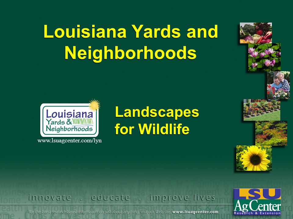 Louisiana Yards and Neighborhoods Landscapes for Wildlife www.lsuagcenter.com/lyn