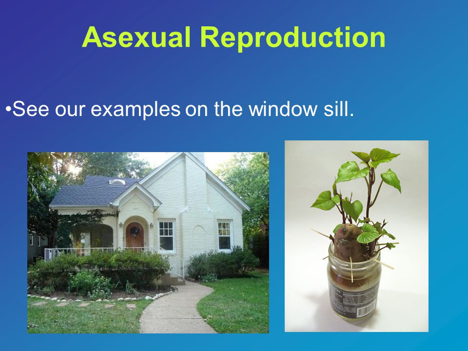 Asexual Reproduction See our examples on the window sill.