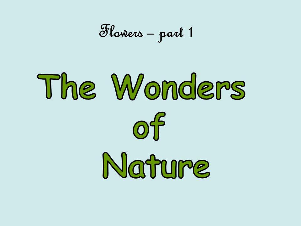 Flowers – part 1