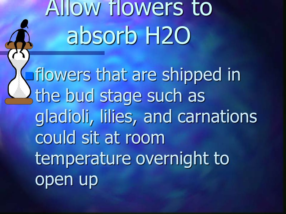 Allow flowers to absorb H2O n at the end of this time for water absorption, the flowers should feel turgid - full of water