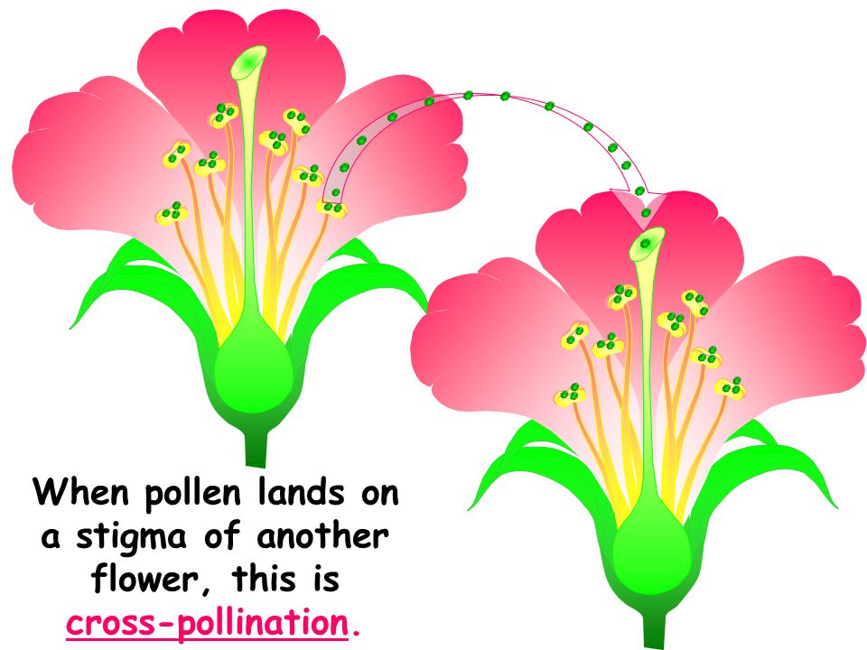 List Of Synonyms And Antonyms Of The Word Self Pollination Diagram