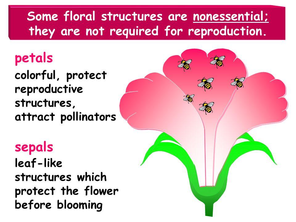 Most flowers have 4 basic parts. petals sepals pistil stamen