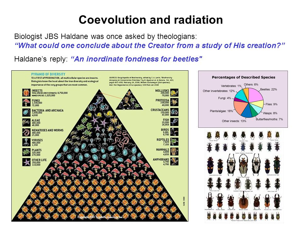Coevolution and radiation Haldanes reply: An inordinate fondness for beetles
