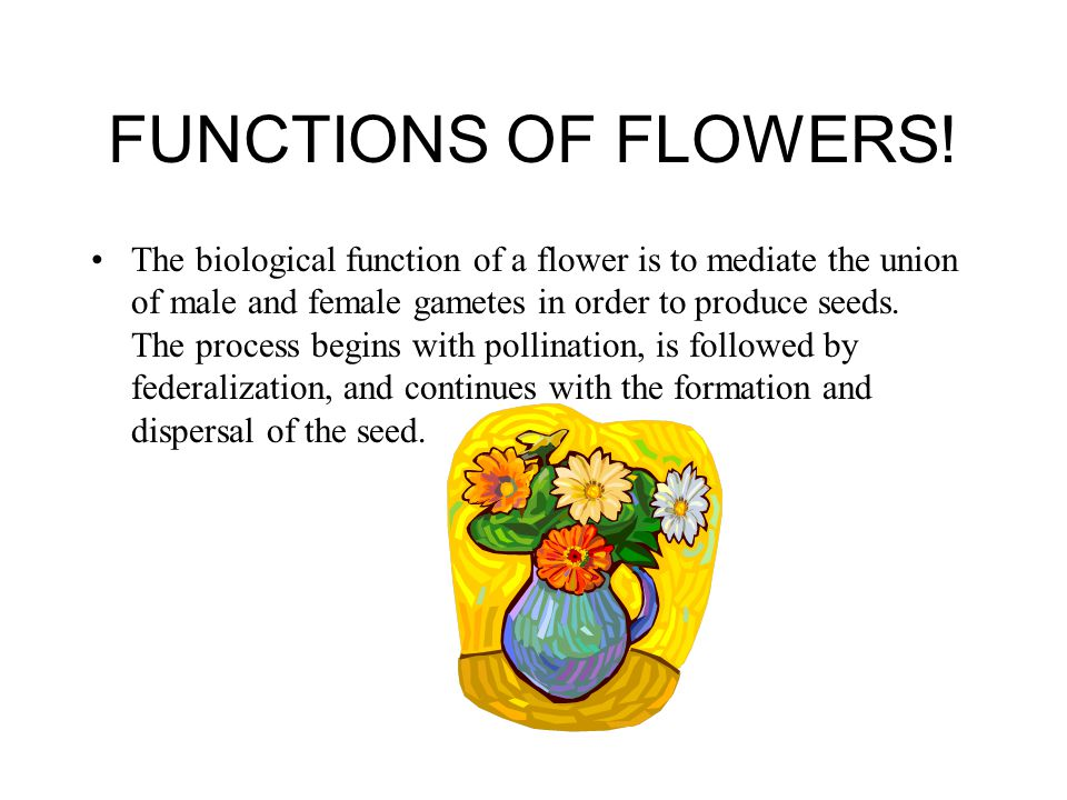 FUNCTIONS OF FLOWERS! The biological function of a flower is to mediate the union of male and female gametes in order to produce seeds. The process be
