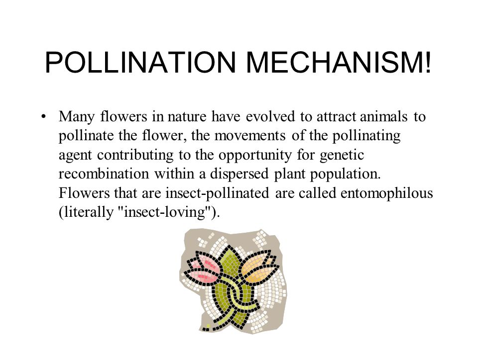 POLLINATION MECHANISM! Many flowers in nature have evolved to attract animals to pollinate the flower, the movements of the pollinating agent contribu