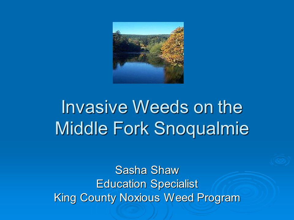 Invasive Weeds on the Middle Fork Snoqualmie Sasha Shaw Education Specialist King County Noxious Weed Program