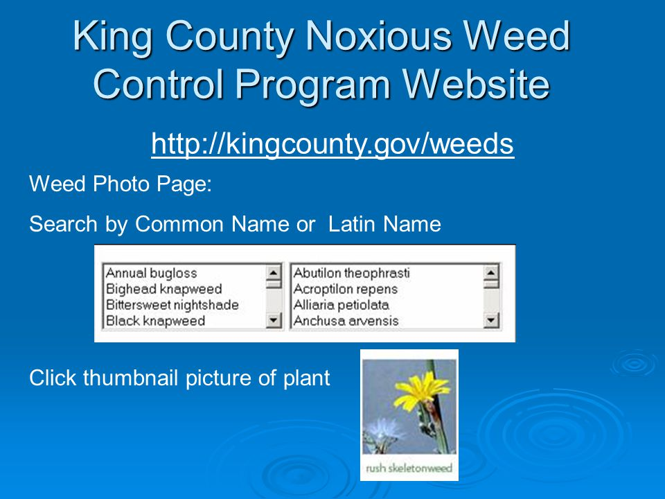 King County Noxious Weed Control Program Website http://kingcounty.gov/weeds Weed Photo Page: Search by Common Name or Latin Name Click thumbnail pict