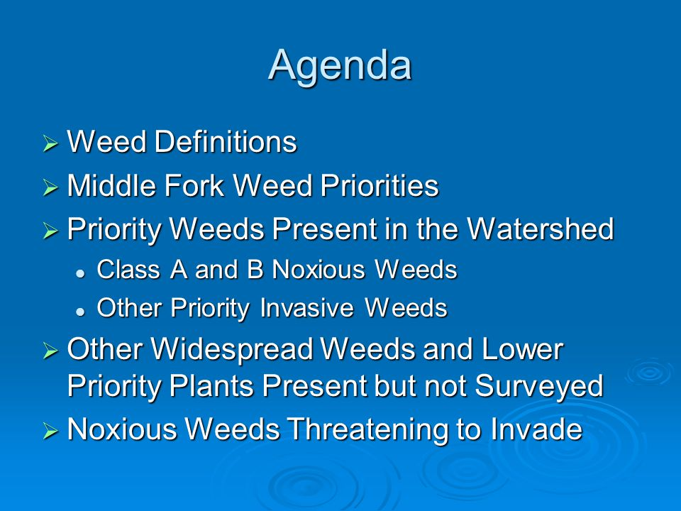 Agenda Weed Definitions Weed Definitions Middle Fork Weed Priorities Middle Fork Weed Priorities Priority Weeds Present in the Watershed Priority Weed