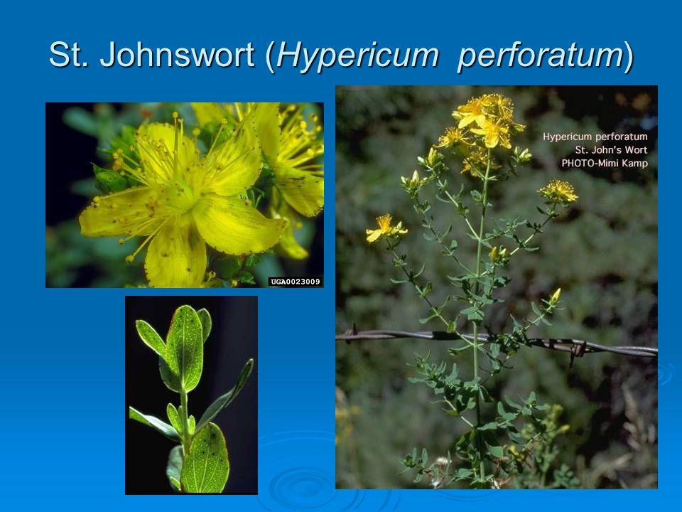 St. Johnswort (Hypericum perforatum)