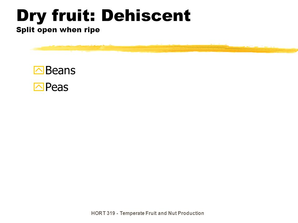 HORT 319 - Temperate Fruit and Nut Production Dry fruit: Dehiscent Split open when ripe yBeans yPeas