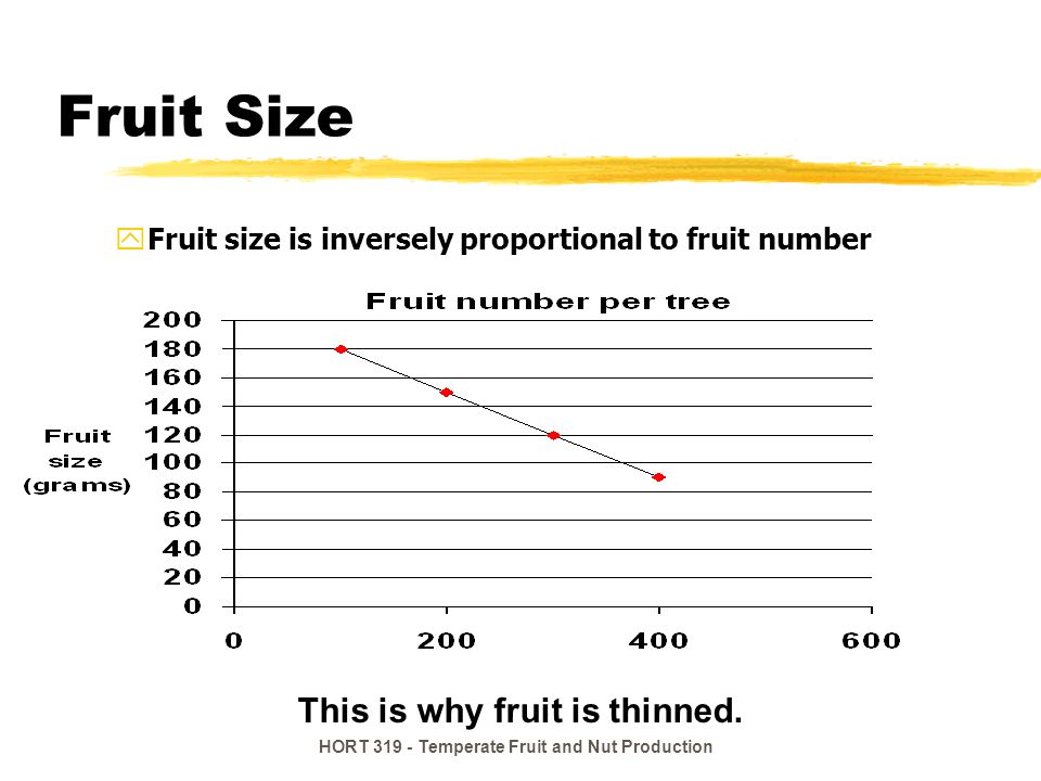 HORT 319 - Temperate Fruit and Nut Production Fruit Size yFruit size is inversely proportional to fruit number This is why fruit is thinned.
