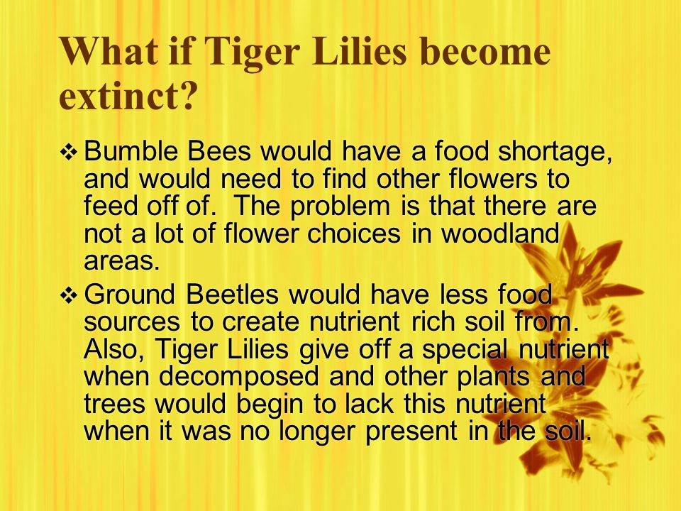 What if Tiger Lilies become extinct.