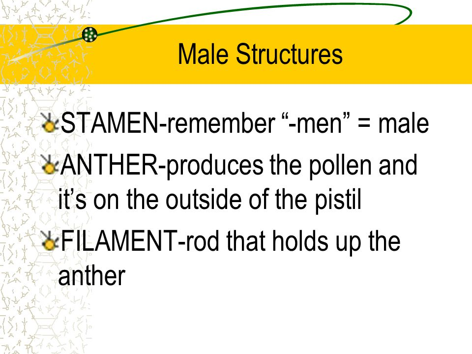 Male Structures STAMEN-remember -men = male ANTHER-produces the pollen and its on the outside of the pistil FILAMENT-rod that holds up the anther