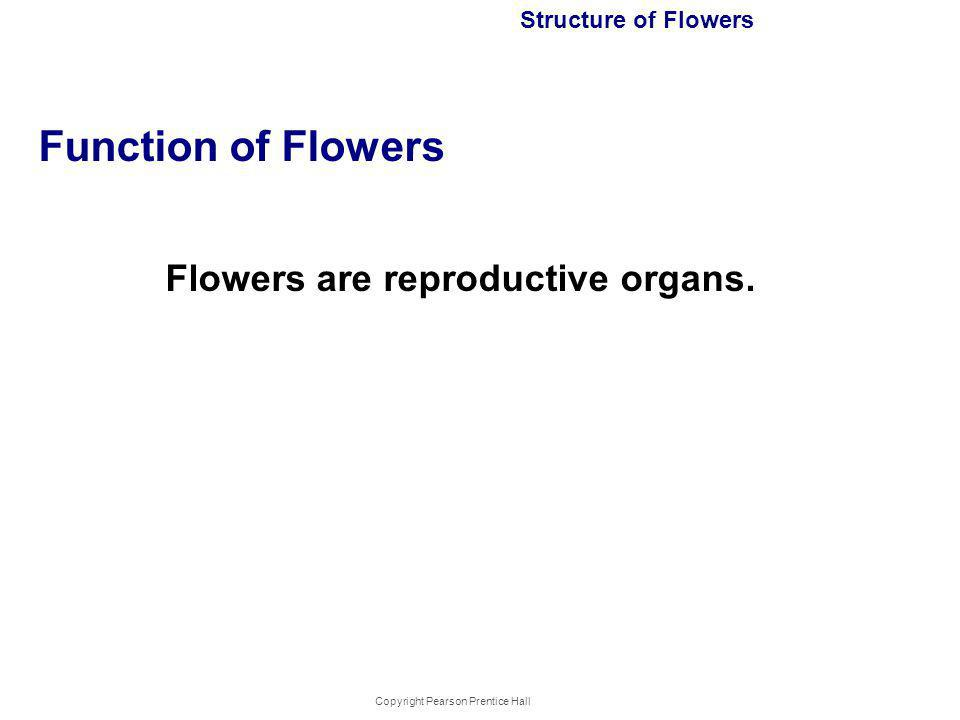Copyright Pearson Prentice Hall Structure of Flowers Function of Flowers Flowers are reproductive organs.