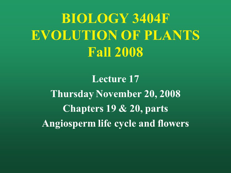Angiosperm life cycle Similar to gymnosperms, EXCEPT that the nuclear state of the developing ovule is much more complex: 2n meiosis n mitosis 8 haploid nuclei (1 egg, 2 synergids, 3 antipodals, 2 polar nuclei) Double fertilization: 2 sperm nuclei involved, one fertilizing the egg ( 2n zygote) and one uniting with the 2 polar nuclei ( 3n endosperm) [other patterns exist, as in lilies] Food reserves of gymnosperm seeds are haploid (megagametophyte tissues); in angiosperms, they are triploid (endosperm) [5n in lilies]