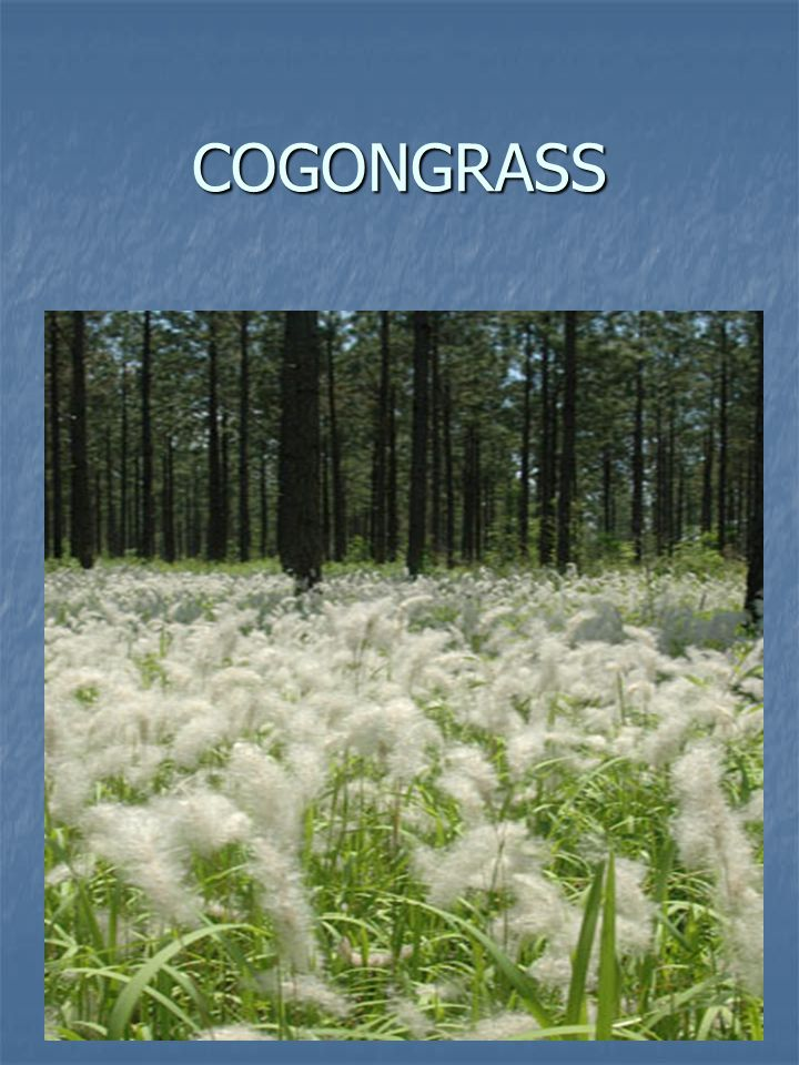COGONGRASS 2003 – 2005 2003 – 2005 The Alabama Department of Agriculture & Industries conducted 863 visual surveys finding 177 positive sites.