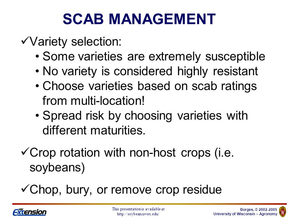 Borges, © University of Wisconsin – Agronomy This presentation is available at   Variety selection: Some varieties are extremely susceptible No variety is considered highly resistant Choose varieties based on scab ratings from multi-location.