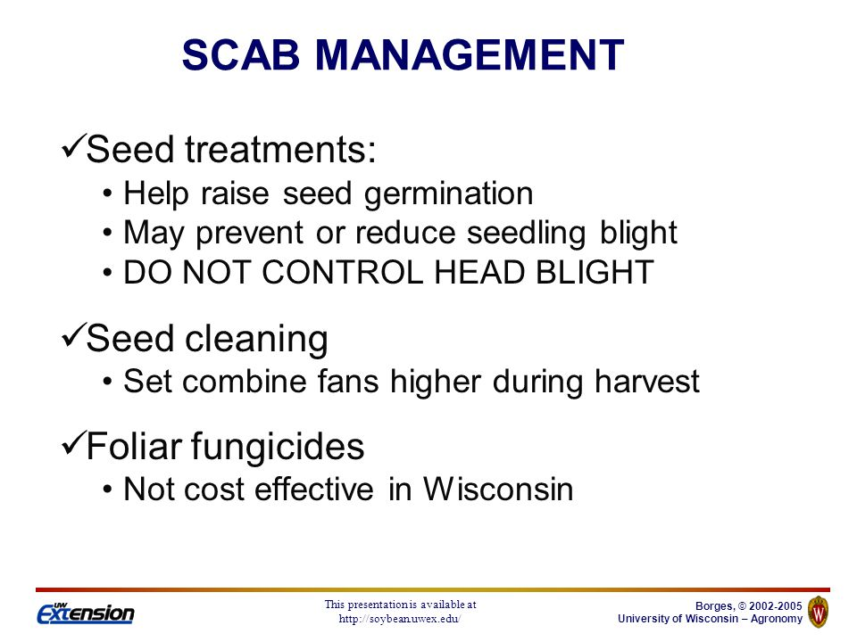 Borges, © University of Wisconsin – Agronomy This presentation is available at   Seed treatments: Help raise seed germination May prevent or reduce seedling blight DO NOT CONTROL HEAD BLIGHT Seed cleaning Set combine fans higher during harvest Foliar fungicides Not cost effective in Wisconsin SCAB MANAGEMENT